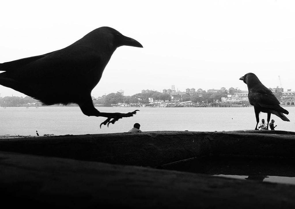©Joy K Roy Chowdhury