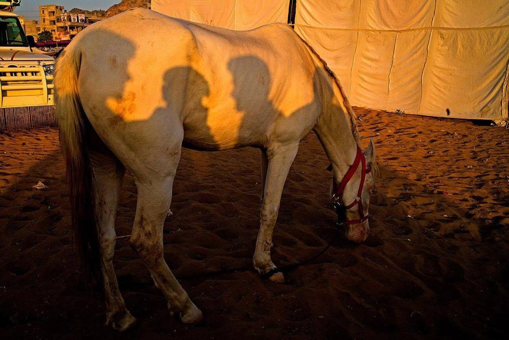 Pushkar © Vineet Vohra